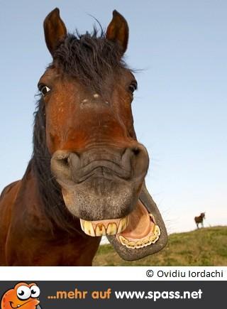 [Bild: Pferd-320x395.jpg]