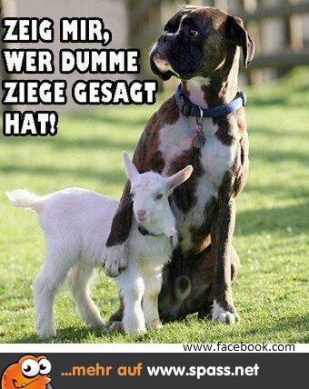 Hund Und Ziege Lustige Bilder Auf Spass Net