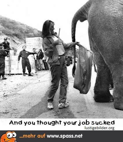 Scheiß Job