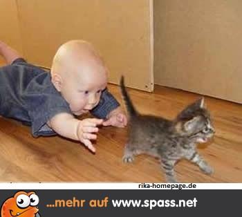 Baby will Katze fangen