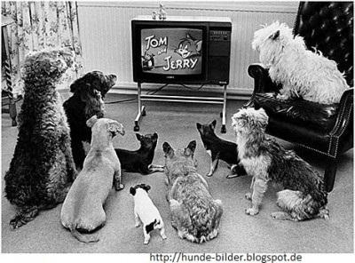 Hunde schauen Tom & Jerry