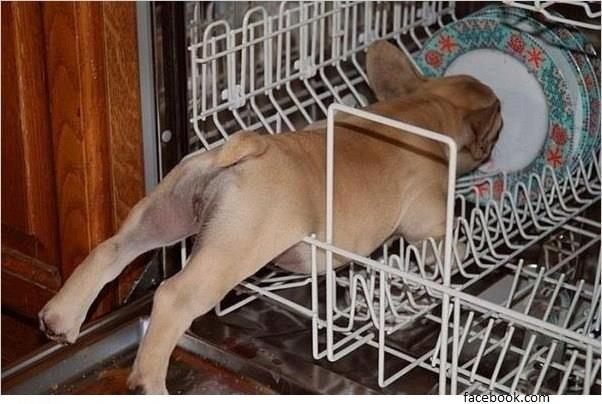 Hund in Spülmaschine