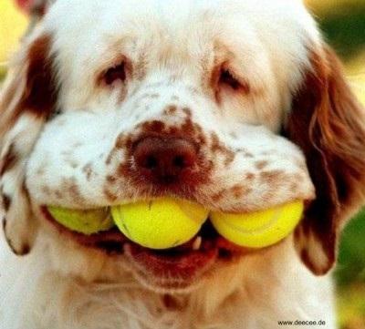Hund mit drei Bällen im Maul