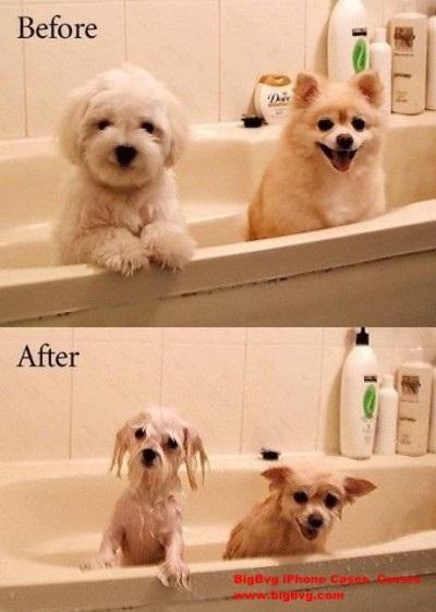 Hunde in der Badewanne
