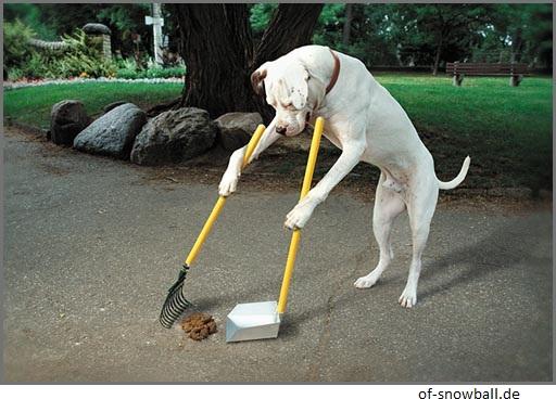 Hund macht Häufchen weg