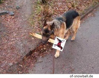 Hund mit Verbotsschild im Maul