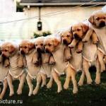 Hunde an Wäscheleine