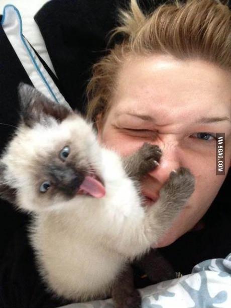 Katze streckt Zunge heraus