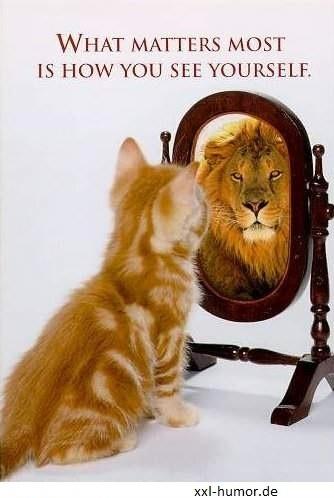 Katzenbaby sieht sich als Löwe