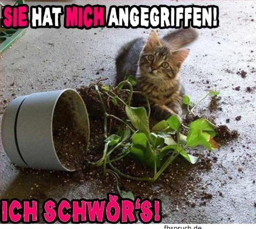 Katze mit zerbrochenen Blumentopf
