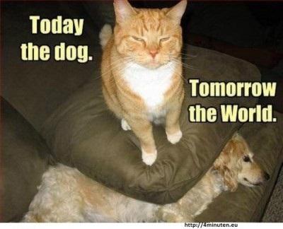 Katze besiegt Hund
