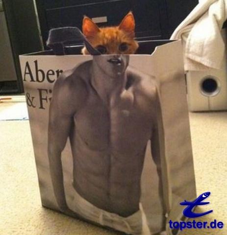 Katze in Einkaufstüte