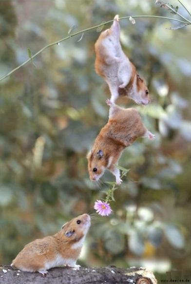 Teamwork für die Blumen-Übergabe