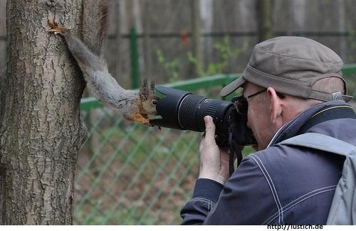 Eichhörnchen vor Kamera