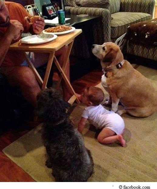 Hunde und Baby schauen auf Essen