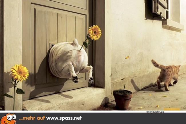 Der Schönste Tag Im Leben Einer Katze Lustige Bilder Auf Spassnet