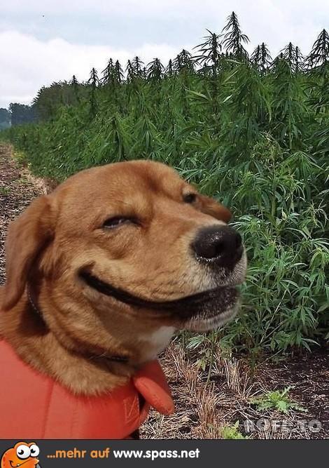 Lustige Bilder Hund
