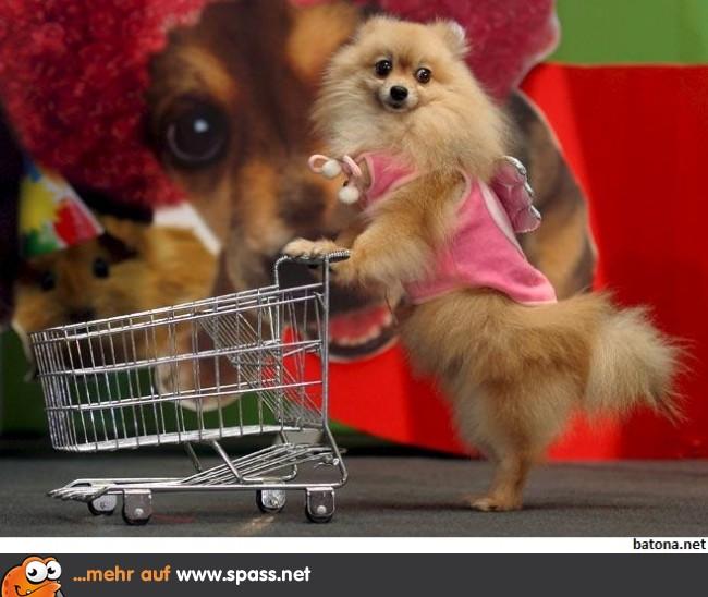 Shopping Lustige Bilder