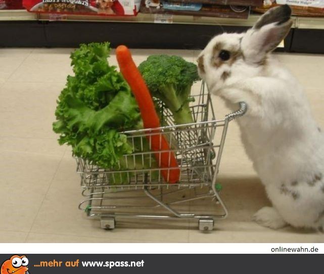 Lustige Bilder Einkaufen