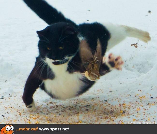 Wilde Jagd Lustige Bilder Auf Spass Net