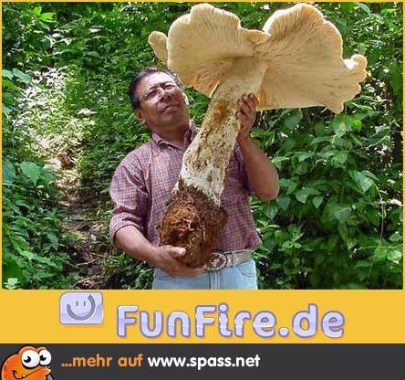 Pilze Bilder Lustig