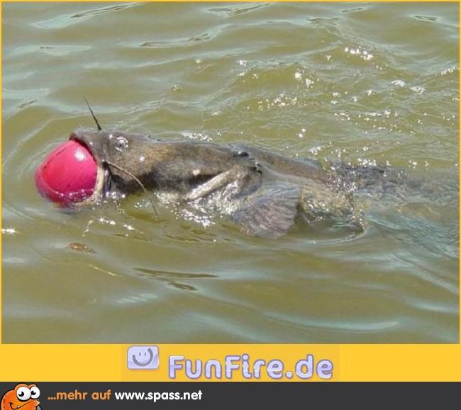fisch frisst fisch spiel