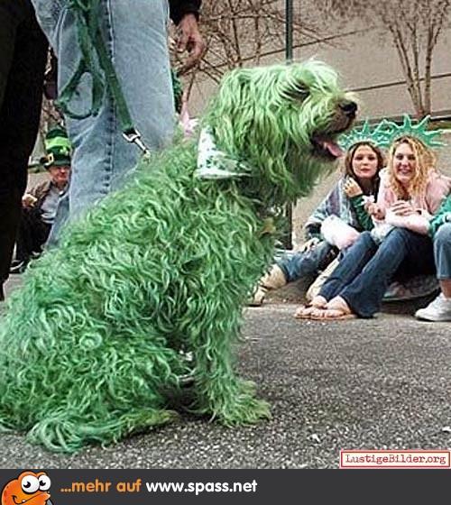 Der Grüne Hund
