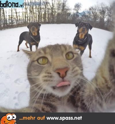 2 Hunde eine Katze Selfie