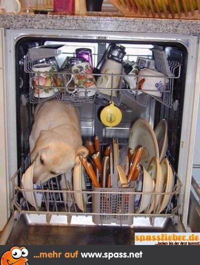 Spülmaschine Hund