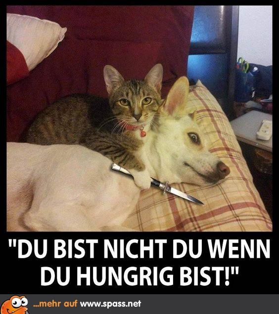 Cat Die Human