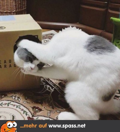 Tiere Lustige Bilder Auf Spass Net