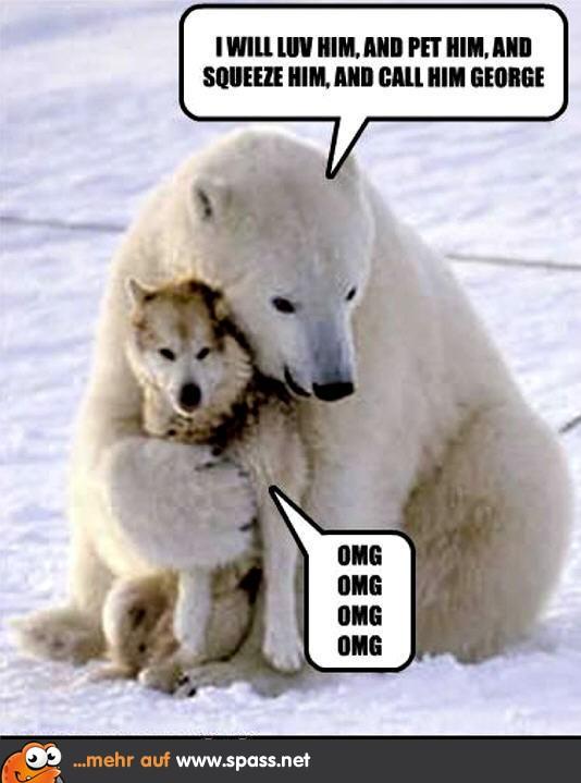 dog-bear-funny-animal-humor-20111365-534-679